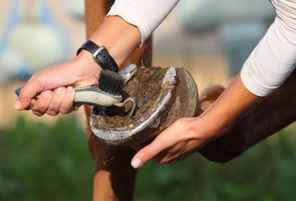 Pferdehufe richtig pflegen