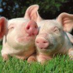 """Neues BMEL-Plakat """"Schutz vor Tiereuchen"""""""
